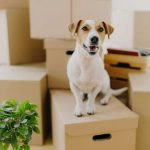 Everything you need to know while moving with your pet